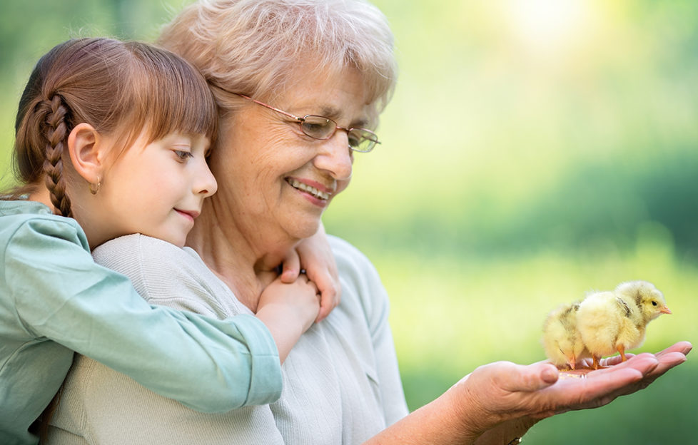 Gran holds baby chick in her hand, granddaughter watches, arms round her neck