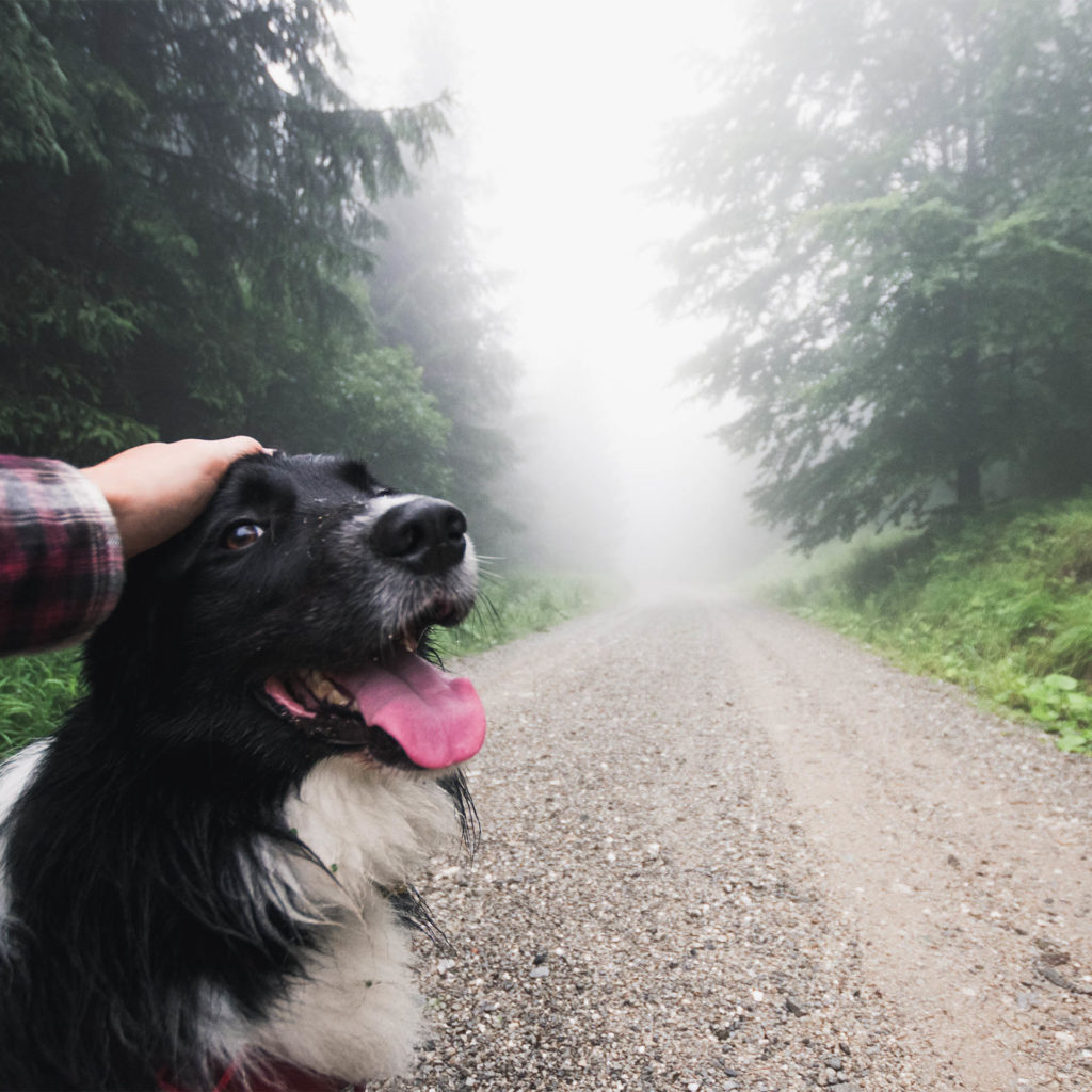 Owner pets happy spaniel on misty forest path