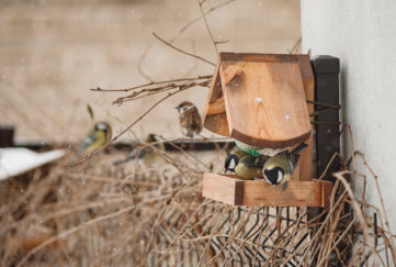 Bird feeder and birds in winter