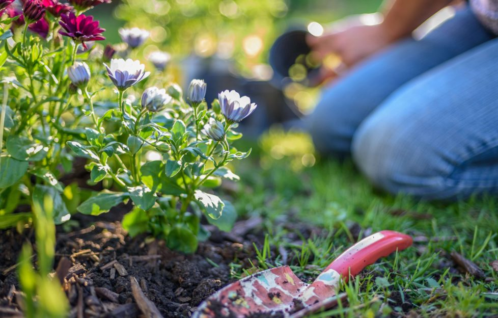 Woman kneeling by flower border, trowel in the earth, newly planted flowering plants