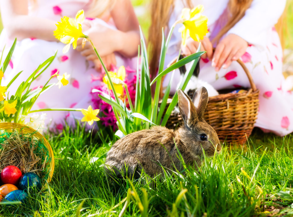 Brown rabbit on grass, daffodils, 2 children with Easter baskets behind