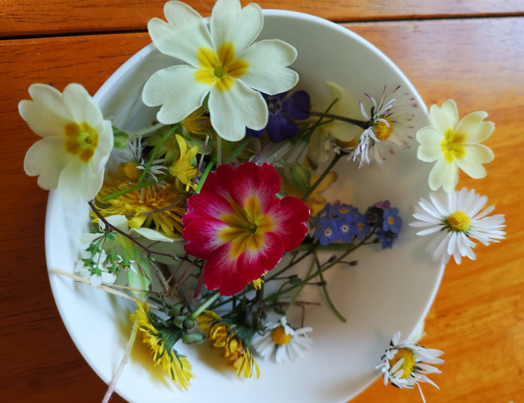 Primulas and wild flowers such as daisies and dandelions in a bowl