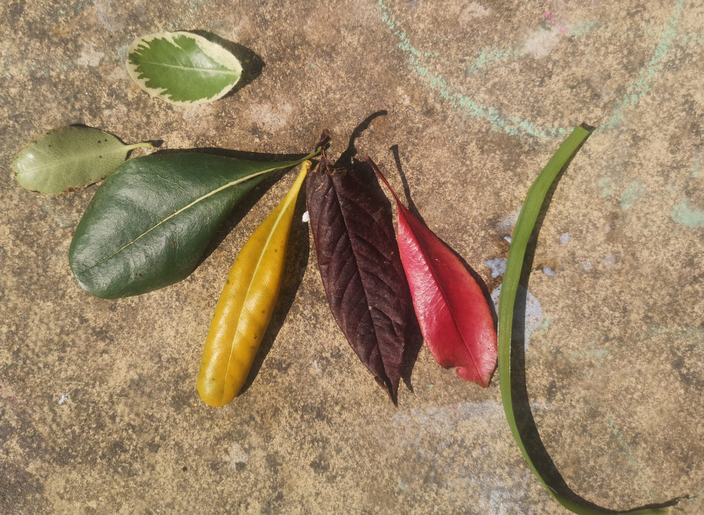Different coloured leaves, red, yellow, green, brown, laid out in a fan shape on a brown flagstone