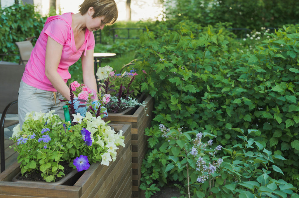 young caucasian woman gardener planting flowers in wooden container pot outside, outdoors planting landscaping,