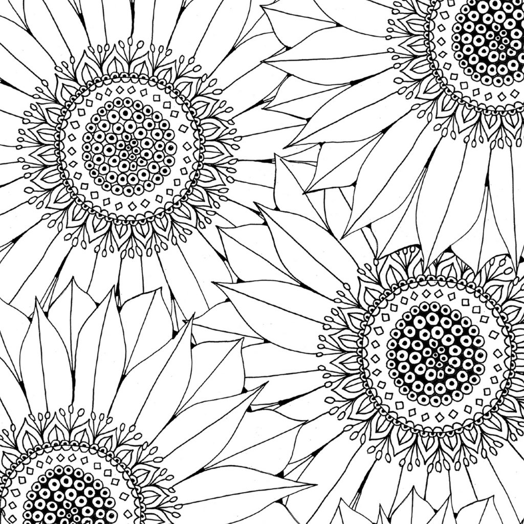 Black and white outline of sunflowers on colouring sheet