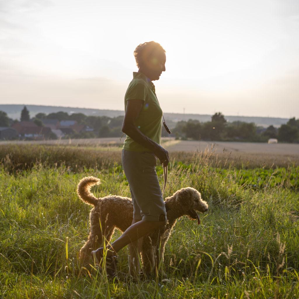 Mature woman walking labradoodle dog in long grass, evening sun