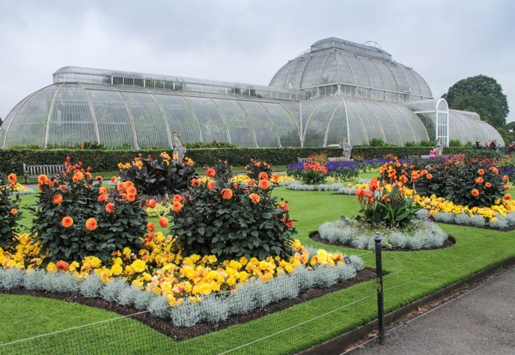 Beds of yellow flowers and bushes with orange blooms. ornate Victorian glasshouse behind