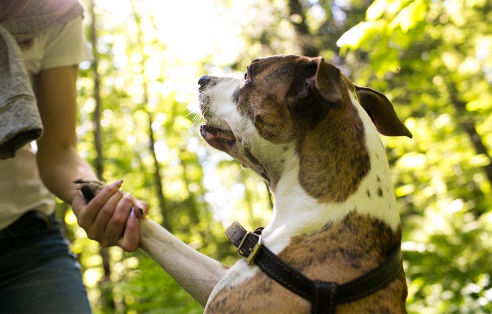 Woman examines dog's paw on woodland walk