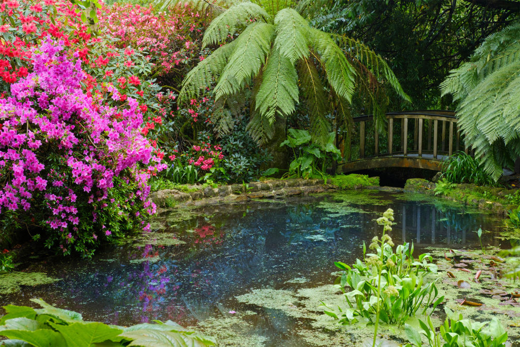 Flowering shrubs and ferns surrounding pond, arched wooden bridge
