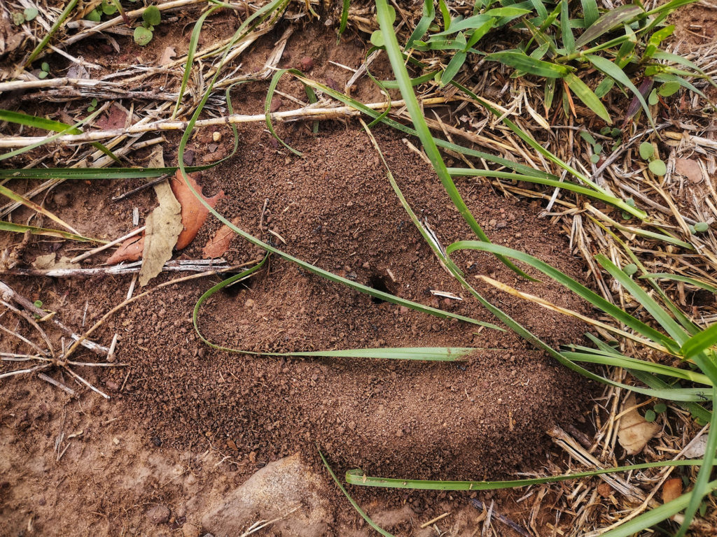 Ant's Hill made from sand on the ground,ant nest soil and sand digging from the ground;