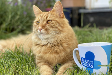 Contented ginger cat lies on grass with cup bearing logo of the Blue Cross