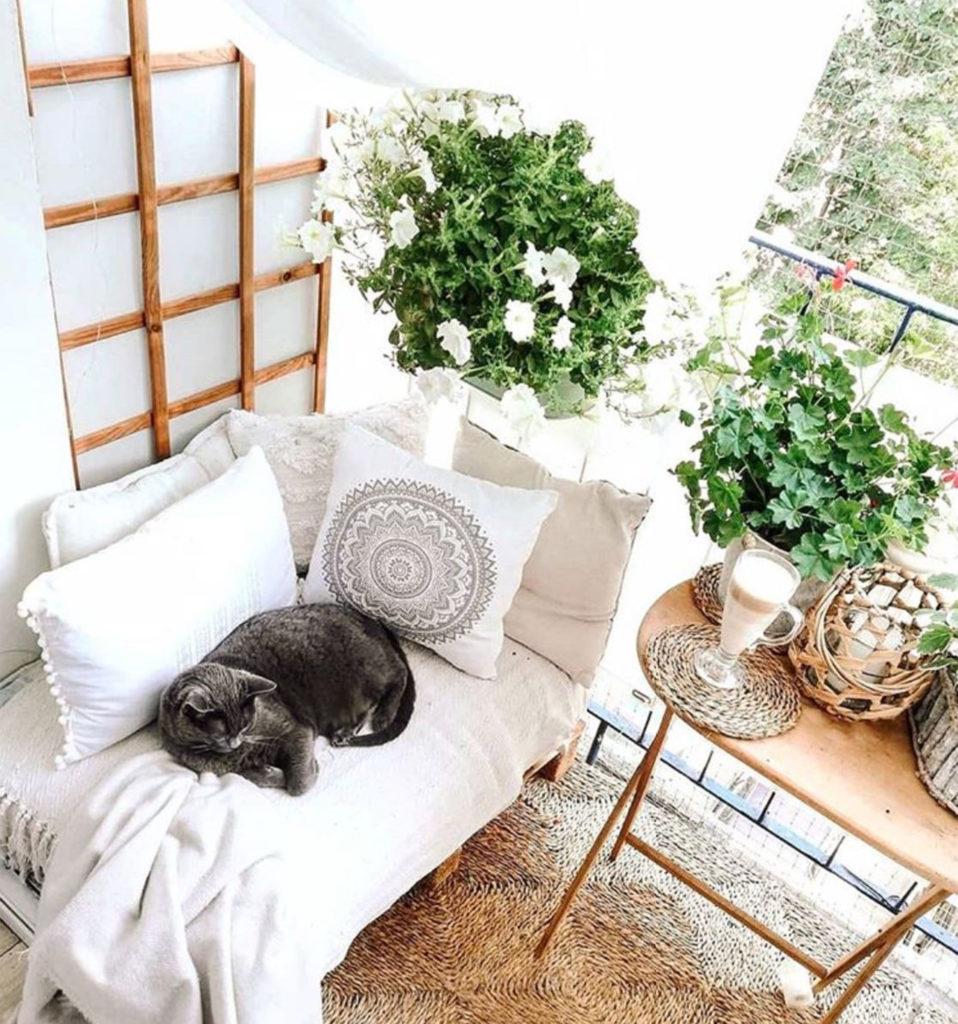Fresh white balcony garden with white flowering plants and grey cat sleeping on white sofa