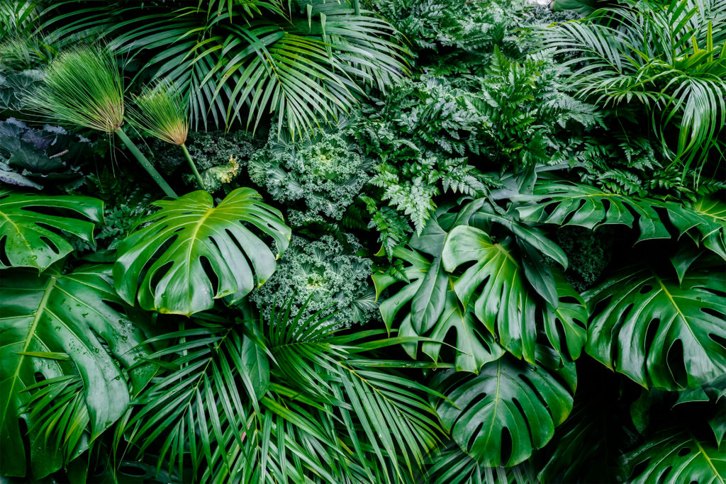 Tropical green leaves background, fern, palm and Monstera Deliciosa leaves