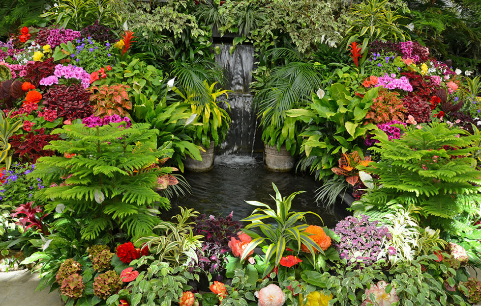 Tropical garden. Waterfall surrounded by ferns and flowering plants