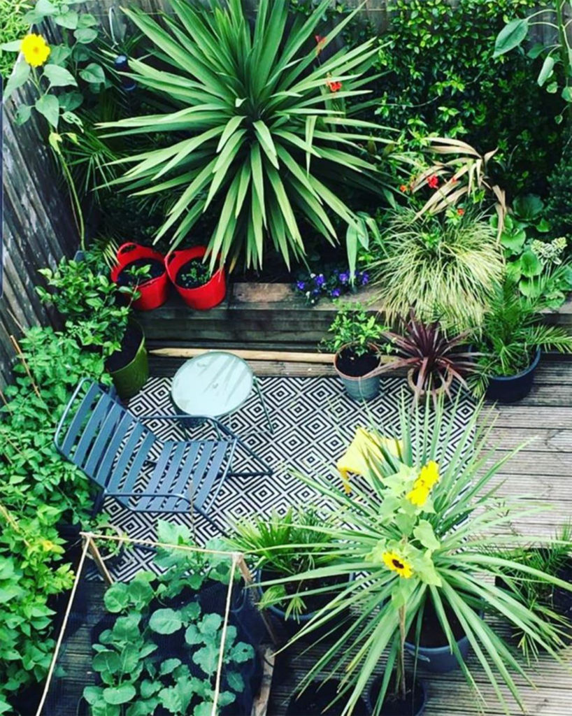 View from above of decking with yucca style plants, sunflowers, tomato plants and small table and chair