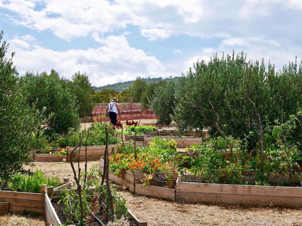 View through large garden with raised beds and mixed veg and flower planting
