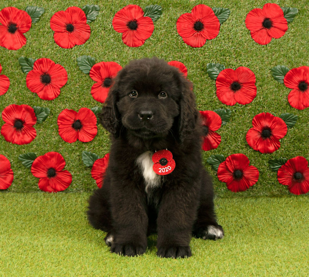 Incredibly cute black puppy with poppy collar tag, looking as if he is smiling at the camera