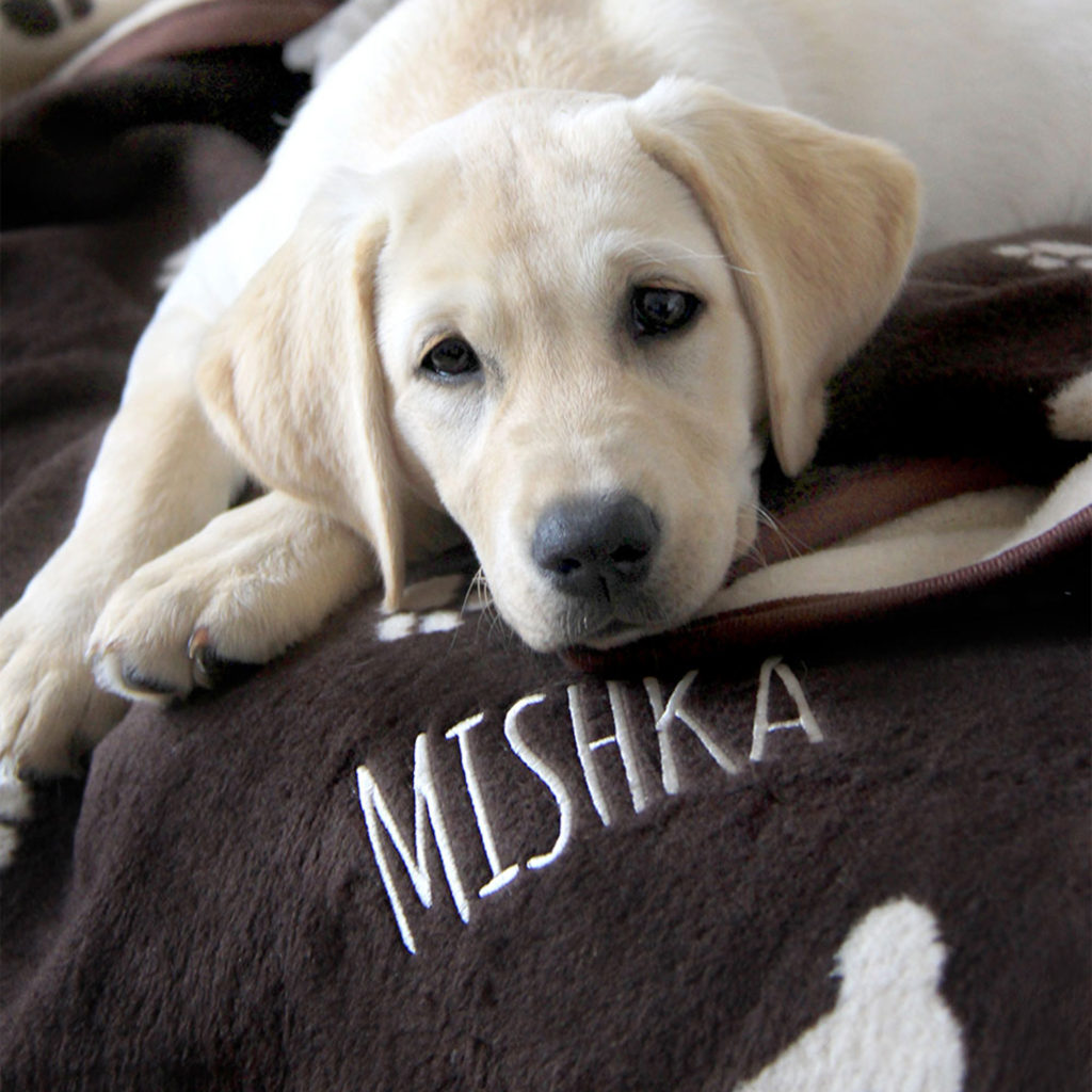 My Weekly bumper issue. Pale golden labrador lying on chocolate brown blanket, with Mishka embroidered on the corner