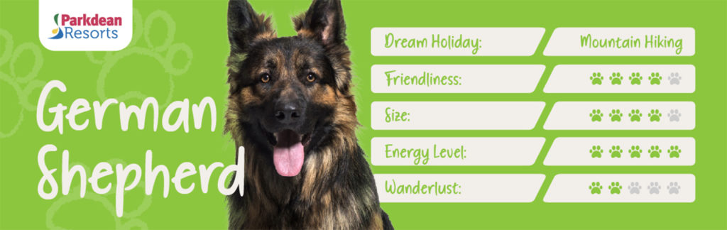 Stats panel for German shepherd dog