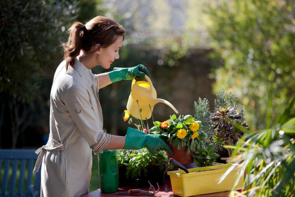 woman planting flowers in her garden;