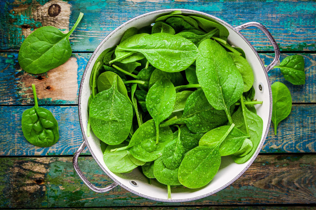 raw fresh spinach with drops in a colander on a rustic wooden table;