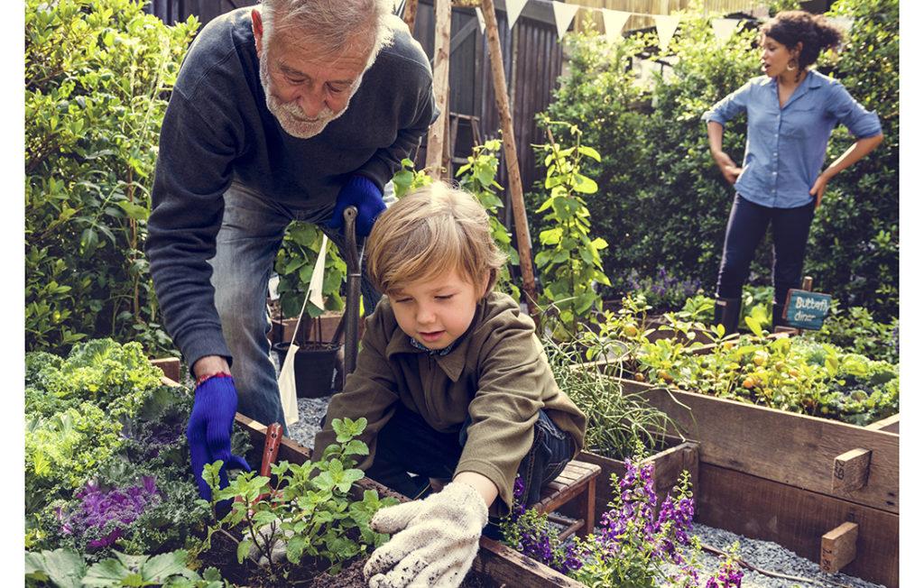 Family planting vegetable from backyard garden;