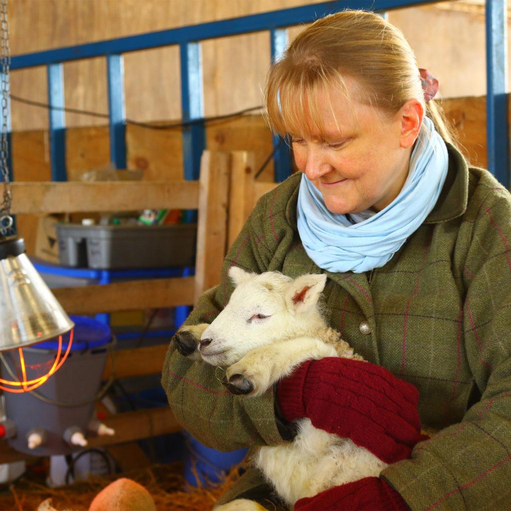 farmer cuddling lamb in barn near heat lamp