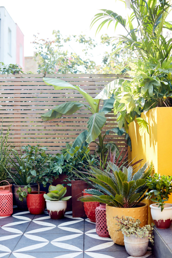 Photo of a jungle-themed planting scheme in containers on a terrace