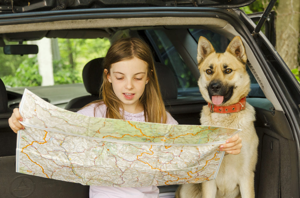 Little child girl and her dog pet sitting in the car trunk. Looking at card map for travel tour.; Shutterstock ID 651165547