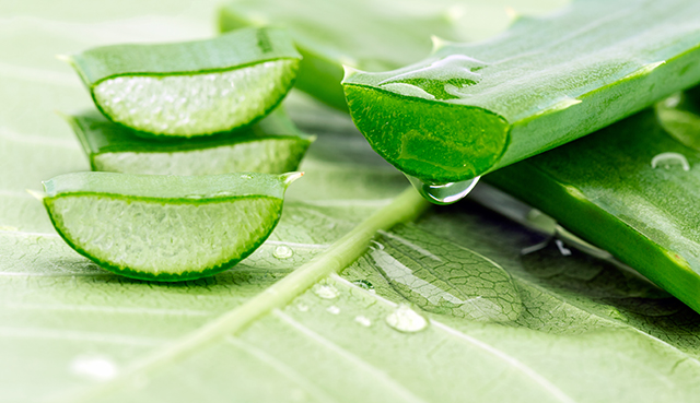 Aloe sliced on a green background; Shutterstock