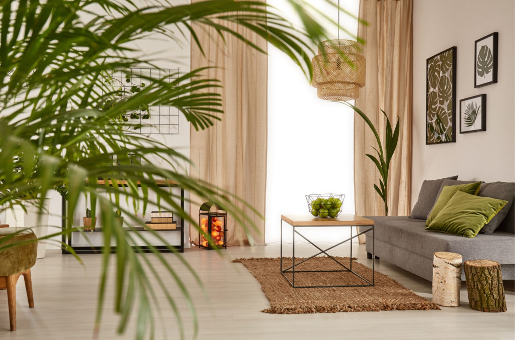 Modern living room with large houseplants