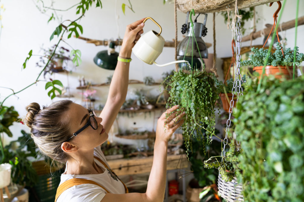 Woman watering plant in room full of plants
