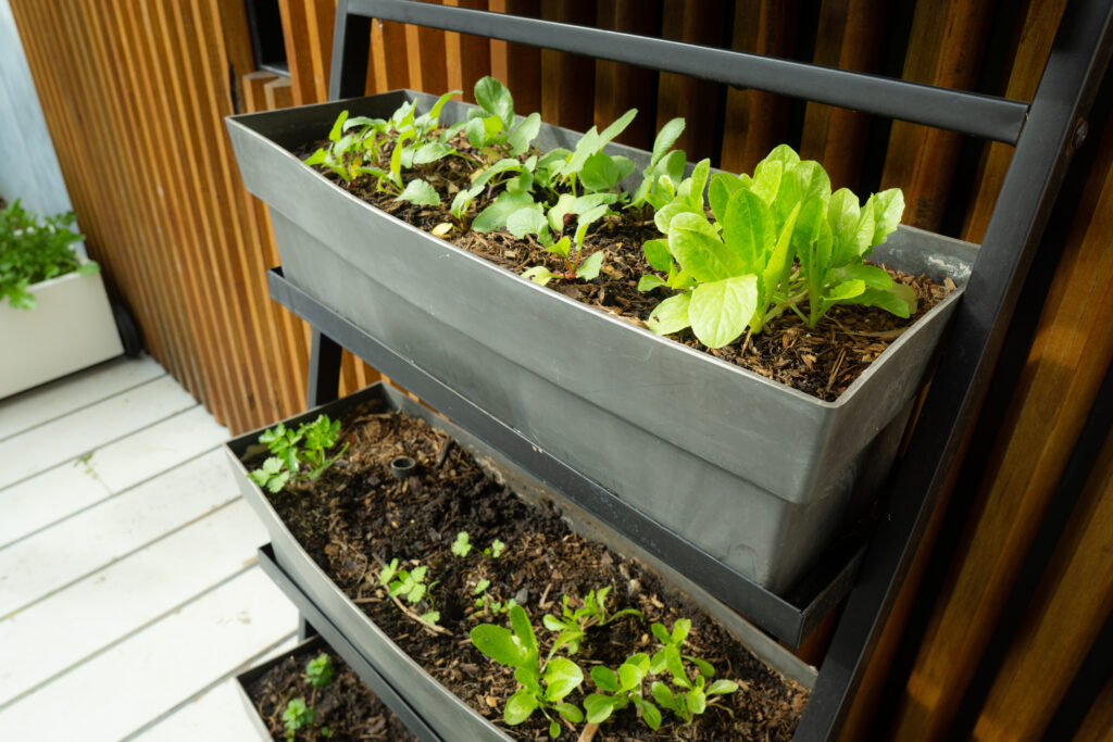 Small space container gardening. Self watering black trough containing lettuce, radish and parsley seedlings.;