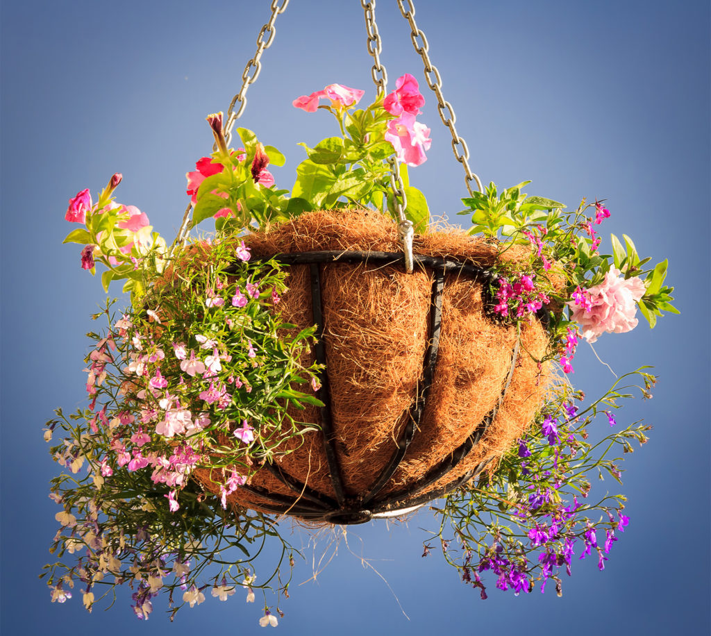 decorative basket with flowers with the blue sky background