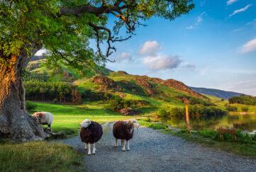 Scenic view Lake District