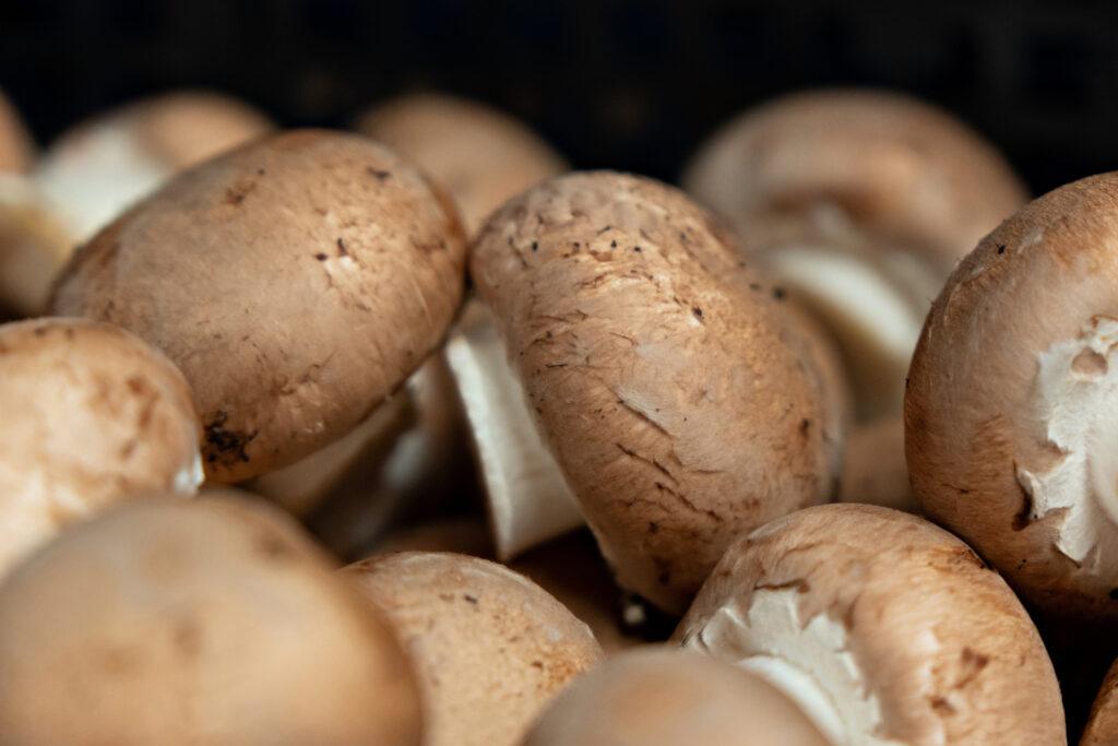 Spider Mushrooms