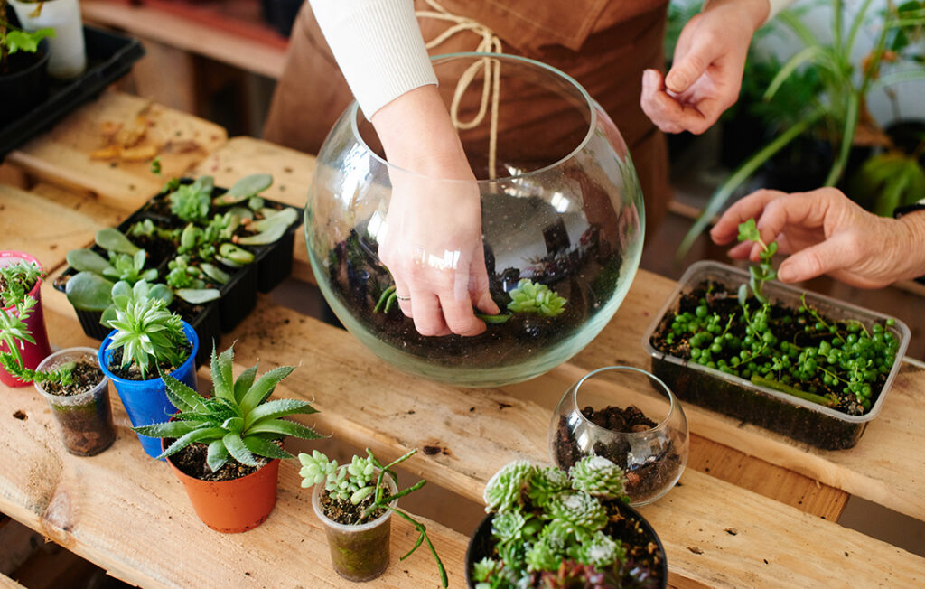 Selecting plants for a terrarium Pic: Shutterstock