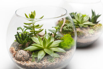 Two planted terrariums Pic: Shutterstock