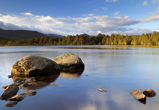 """""""Beautiful early morning light over a tranquil lake. Photographed at Loch Morlich, Cairngorms, Scotland."""""""
