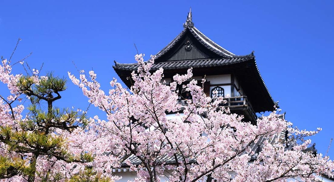 japan cherry blossom hotspots