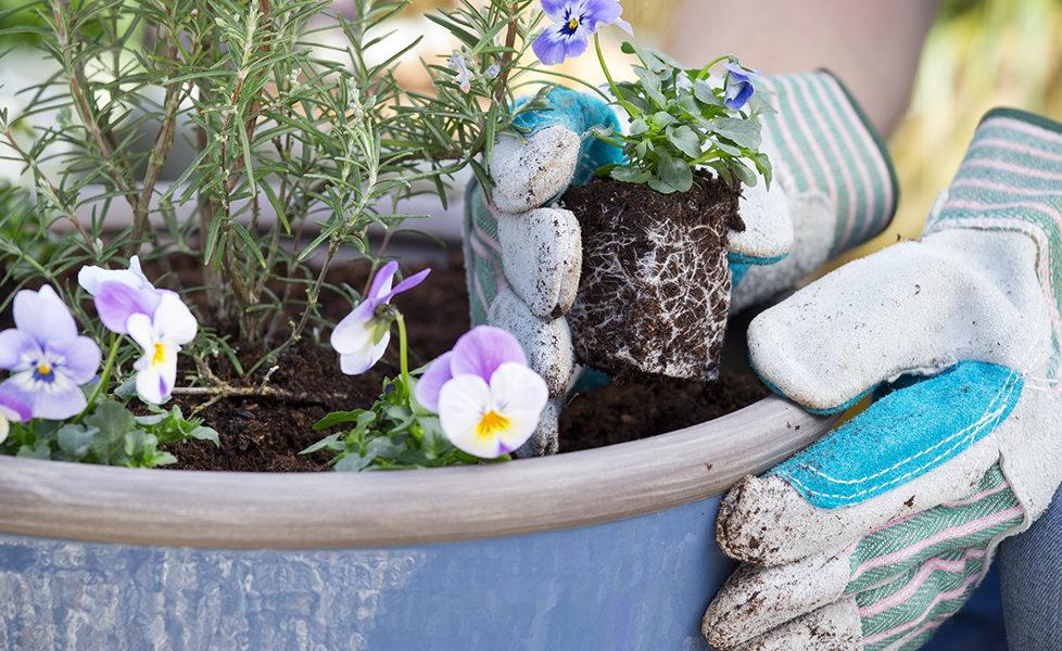 Dobbies Gardening Tips