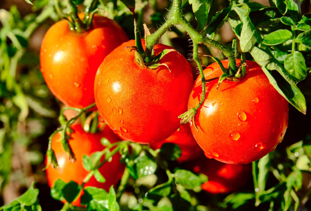 Eco-Friendly Garden Tips