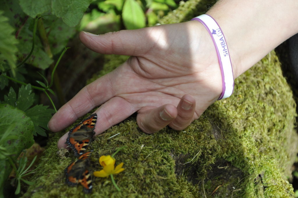 Dozens of butterflies were released in memory of children who have died. 16_T25_Butteryflyrelease09