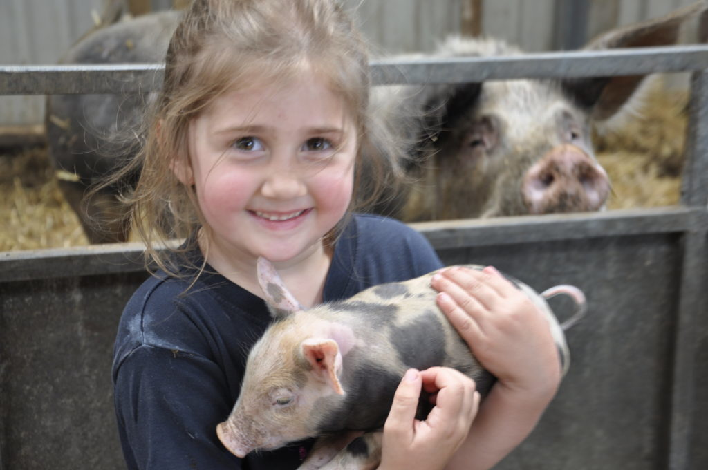 Hayley Ronald, 4, was one of the spectators at this year's shearing competition at Saulmore Farm