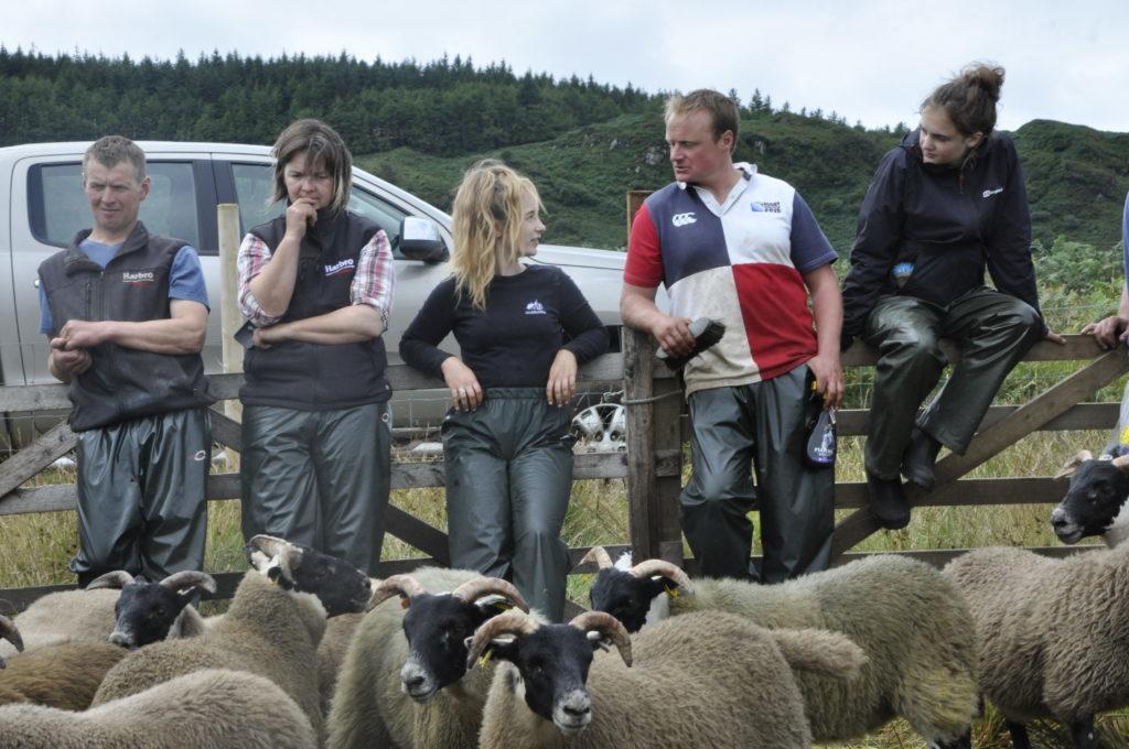 Waiting for sheep judging