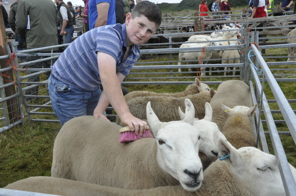 Alexander Quinn, 11, lends a helping hand getting sheep from Dervaig ready for judging
