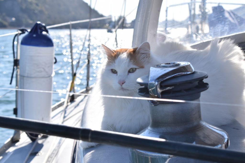 Salty the sea cat. Photograph: Angus Blackburn