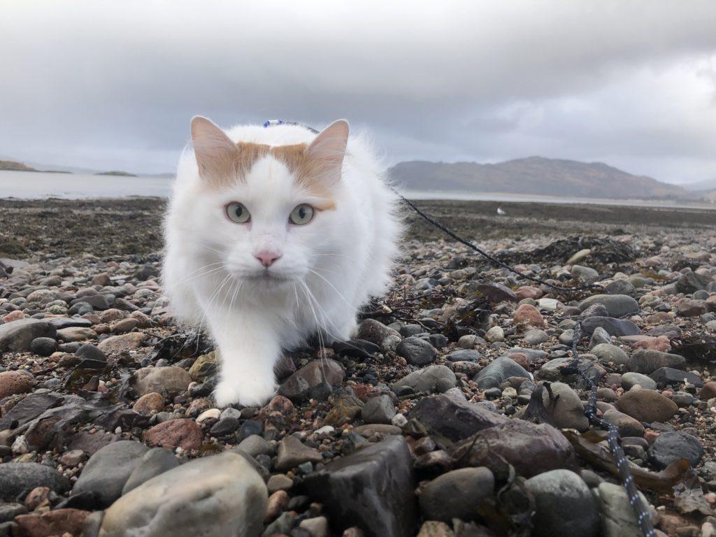 Salty the sea cat exploring the shore.