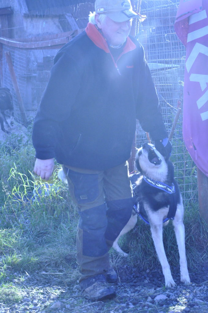 Alan has a difficult job deciding which dogs to take on the run. 'Pick me,' they all sing.