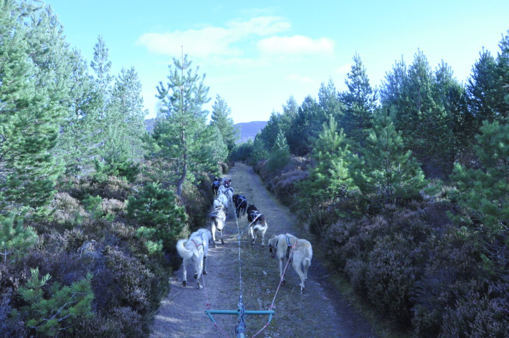 Alan built all the trails himself on the Rothiemurchas estate in Aviemore.